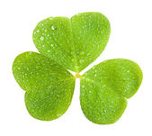 Clover with drop — Stock Photo