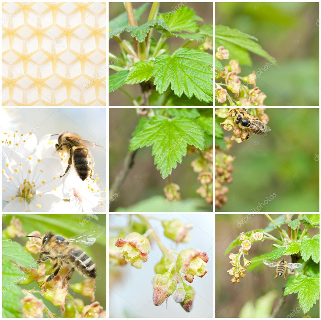 A pollination, collage from 6 photo — Stock Photo #11132073