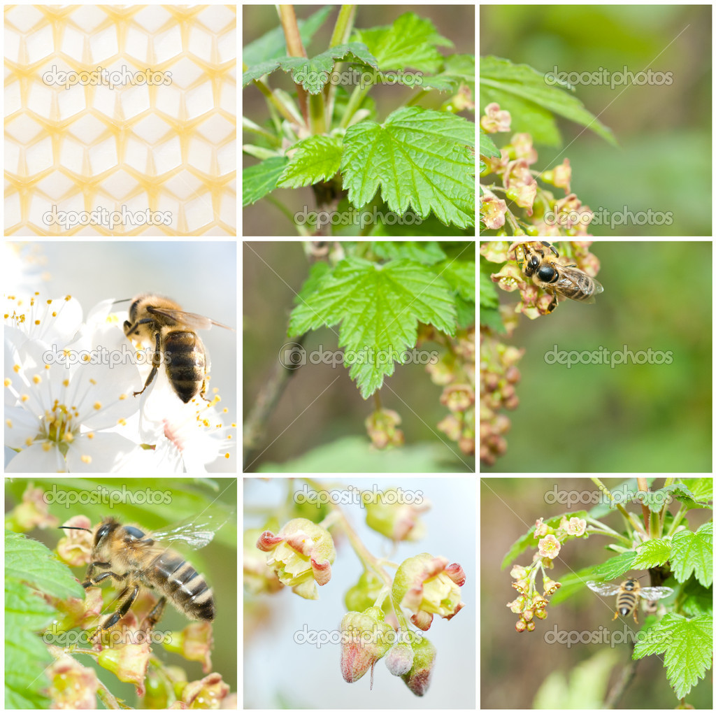 A pollination, collage from 6 photo — Stockfoto #11132073