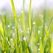 A drop on the grass — Stock Photo