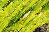 Verde muschio — Foto Stock