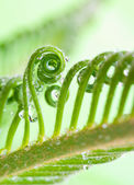 Tendril — Stockfoto
