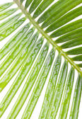 A Cycas — Stock Photo