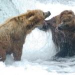 Alaskan brown bears fighting — Stock Photo #12204549