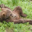 Alaskbrown bear cub — Stock Photo #12204550