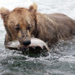 Stock Photo: Alaskbrown bear with salmon