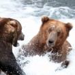 Stock Photo: Two large Alaskbrown bears fighting in water