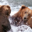 Two large Alaskan brown bears fighting in the water — Stockfoto