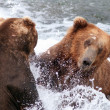 Two large Alaskan brown bears fighting in the water — Stock fotografie