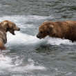 alaskan brown bears fighting — Stock Photo