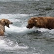 Alaskan brown bears fighting — Stock Photo #12318700