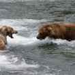 Stock Photo: Alaskbrown bears fighting