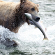 Alaskbrown bear with salmon in its mouth — Stock Photo #12319782