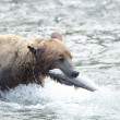 Alaskbrown bear with salmon in its mouth — Stock Photo #12319849