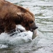 Alaskbrown bear with salmon — Stock Photo #12319928