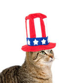 Cute cat with Fourth of July hat — Zdjęcie stockowe