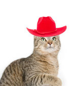 Cute tabby cat with red hat — Stock Photo