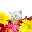 Cute baby kitten — Foto Stock