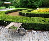 Gardener governing bed of flowers. — Stock Photo