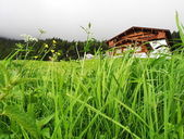 Tyrolean meadow — Stock Photo