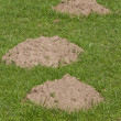 Three Molehills — Stock Photo #11062081