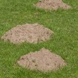 Royalty-Free Stock Photo: Three Molehills