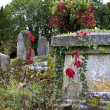 Stock Photo: Overgrown Graveyard