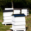 Bee Hives — Stock Photo
