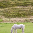 Grey horse grazing — Stock Photo #11069639