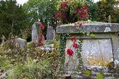 Overgrown Graveyard — Stock Photo
