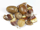 Close up of Mixed wild nuts — Stock Photo