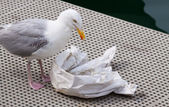 Seagull eating remains of fish and chips — Stock Photo