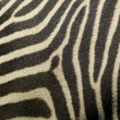 Detail of Zebrstripes — Stock Photo #11074802