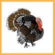 Turkey — Stock Vector