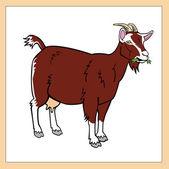 Brown goat — Stock Vector