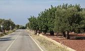 Puglia — Stock Photo