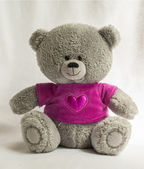 Bear taddy — Stock Photo