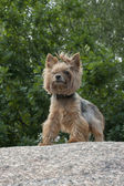 Pride dog — Stock Photo