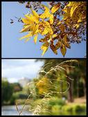 Autumn, collage — Stock Photo