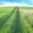 Path across green field — Stock Photo