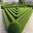 Stock Photo: Decorative hedge in AjudBotanical Garden, Lisbon,
