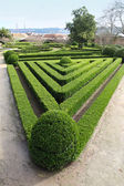 Decorative hedge in Ajuda Botanical Garden, Lisbon, — Stock Photo