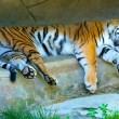 Resting Amur Tiger — Stock Photo