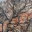 Tree branches — Stock Photo #11039610