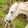 Stock Photo: Horse portrait eating