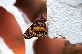 Beatifull butterfly close on wall of leaked bricks — Stock Photo