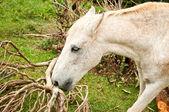 Horse portrait eating — Stock Photo