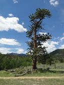 Lone Tree in Colorado Mountains — Stock Photo