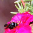 Stock Photo: Bee and Flower