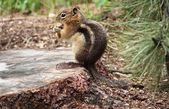 Squirrel on stump — Stock Photo